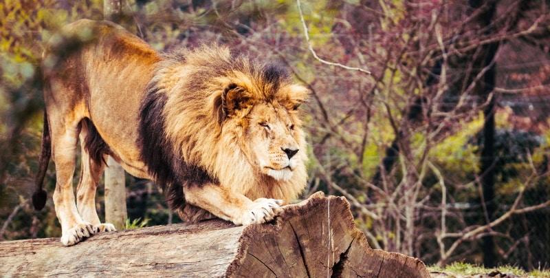 'De Leeuwenpoort' op 8-8 opent deuren
